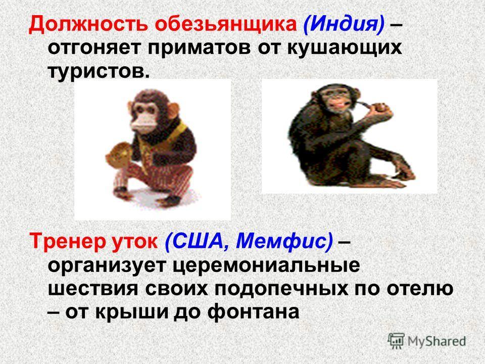 Должность обезьянщика (Индия) – отгоняет приматов от кушающих туристов. Тренер уток (США, Мемфис) – организует церемониальные шествия своих подопечных по отелю – от крыши до фонтана