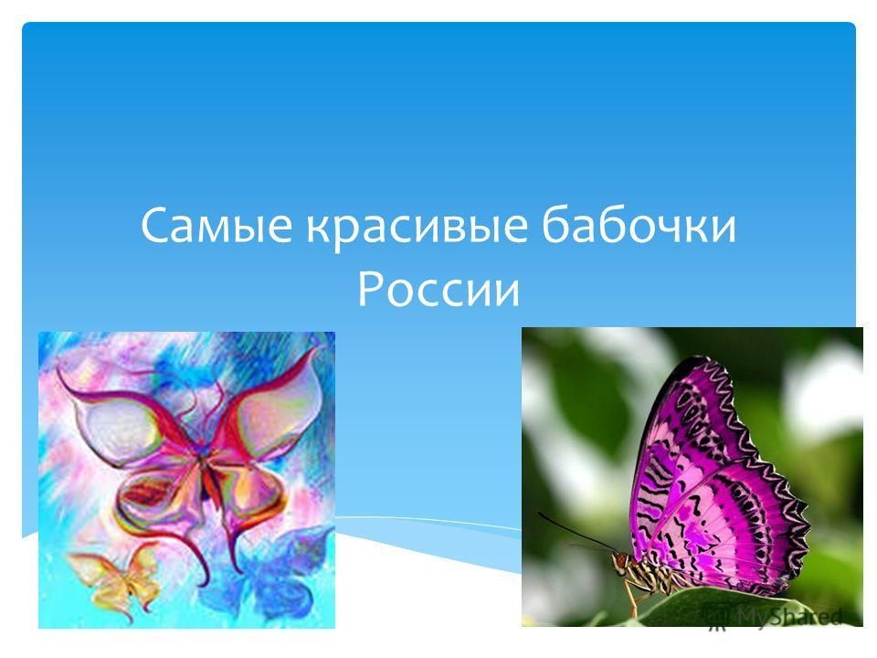 Самые красивые бабочки России
