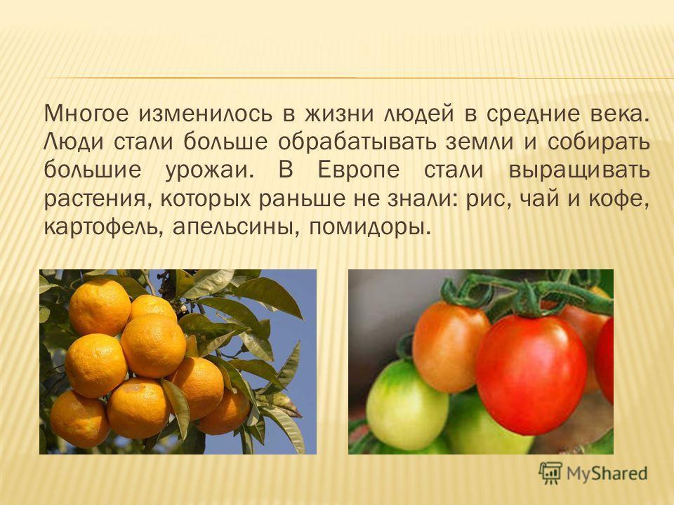 Многое изменилось в жизни людей в средние века. Люди стали больше обрабатывать земли и собирать большие урожаи. В Европе стали выращивать растения, которых раньше не знали: рис, чай и кофе, картофель, апельсины, помидоры.