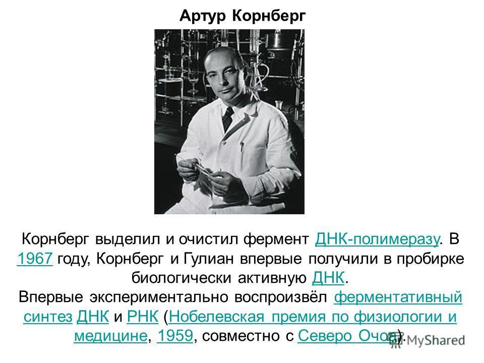 Артур Корнберг Корнберг выделил и очистил фермент ДНК-полимеразу. В 1967 году, Корнберг и Гулиан впервые получили в пробирке биологически активную ДНК.ДНК-полимеразу 1967ДНК Впервые экспериментально воспроизвёл ферментативный синтез ДНК и РНК (Нобеле