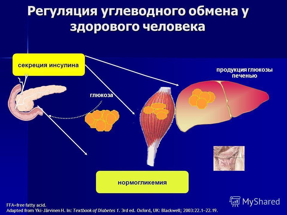 Регуляция углеводного обмена у здорового человека FFA=free fatty acid. Adapted from Yki-Järvinen H. In: Textbook of Diabetes 1. 3rd ed. Oxford, UK: Blackwell; 2003:22.1 22.19. продукция глюкозы печенью глюкоза секреция инсулина нормогликемия