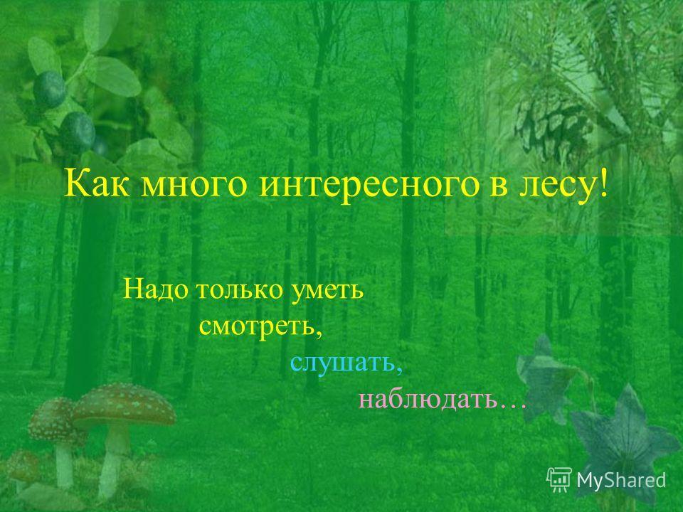 Как много интересного в лесу! Надо только уметь смотреть, слушать, наблюдать…