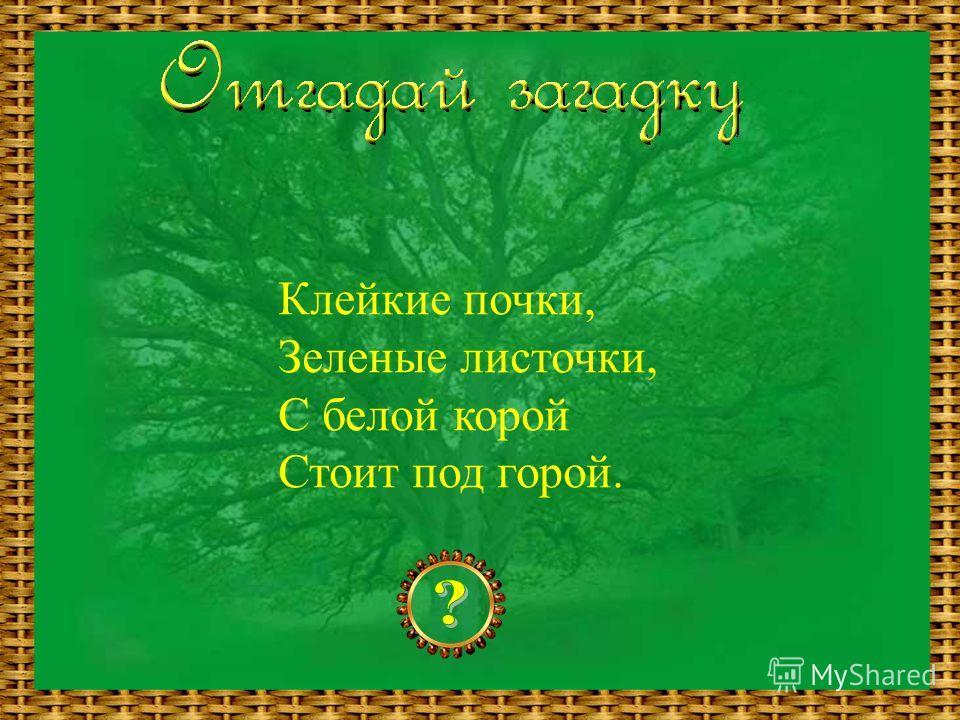 Клейкие почки, Зеленые листочки, С белой корой Стоит под горой.