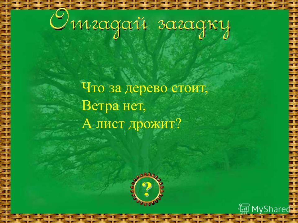 Что за дерево стоит, Ветра нет, А лист дрожит?