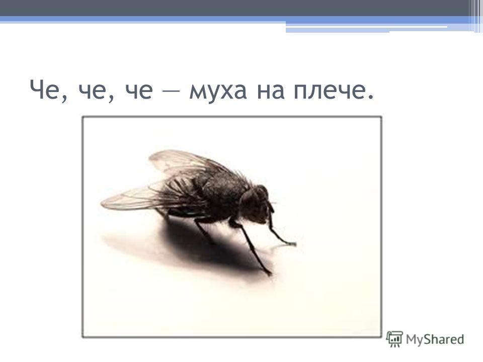 Че, че, че муха на плече.