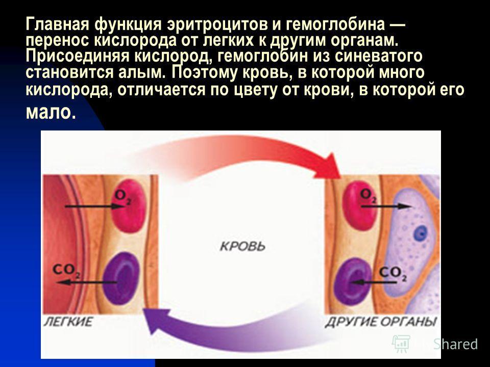 Главная функция эритроцитов и гемоглобина перенос кислорода от легких к другим органам. Присоединяя кислород, гемоглобин из синеватого становится алым. Поэтому кровь, в которой много кислорода, отличается по цвету от крови, в которой его мало.