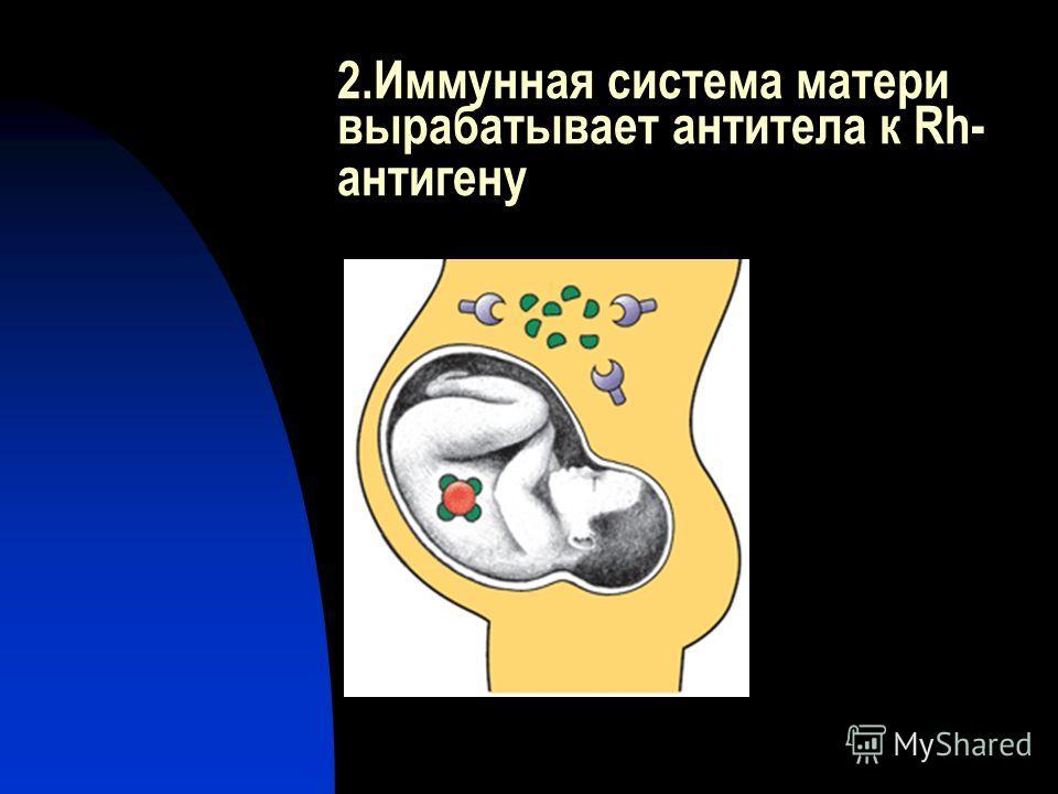 2.Иммунная система матери вырабатывает антитела к Rh- антигену