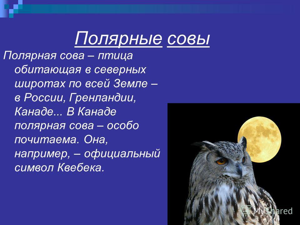 Полярные совы Полярная сова – птица обитающая в северных широтах по всей Земле – в России, Гренландии, Канаде... В Канаде полярная сова – особо почитаема. Она, например, – официальный символ Квебека.