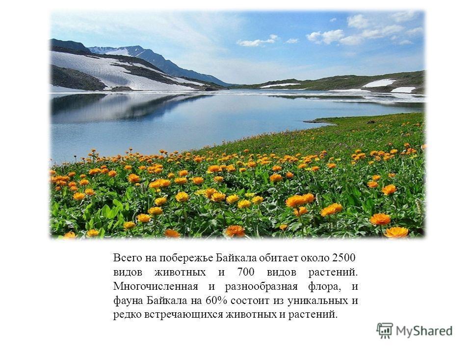 Всего на побережье Байкала обитает около 2500 видов животных и 700 видов растений. Многочисленная и разнообразная флора, и фауна Байкала на 60% состоит из уникальных и редко встречающихся животных и растений.