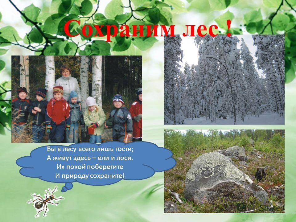 Вы в лесу всего лишь гости; А живут здесь – ели и лоси. Их покой поберегите И природу сохраните! Сохраним лес !