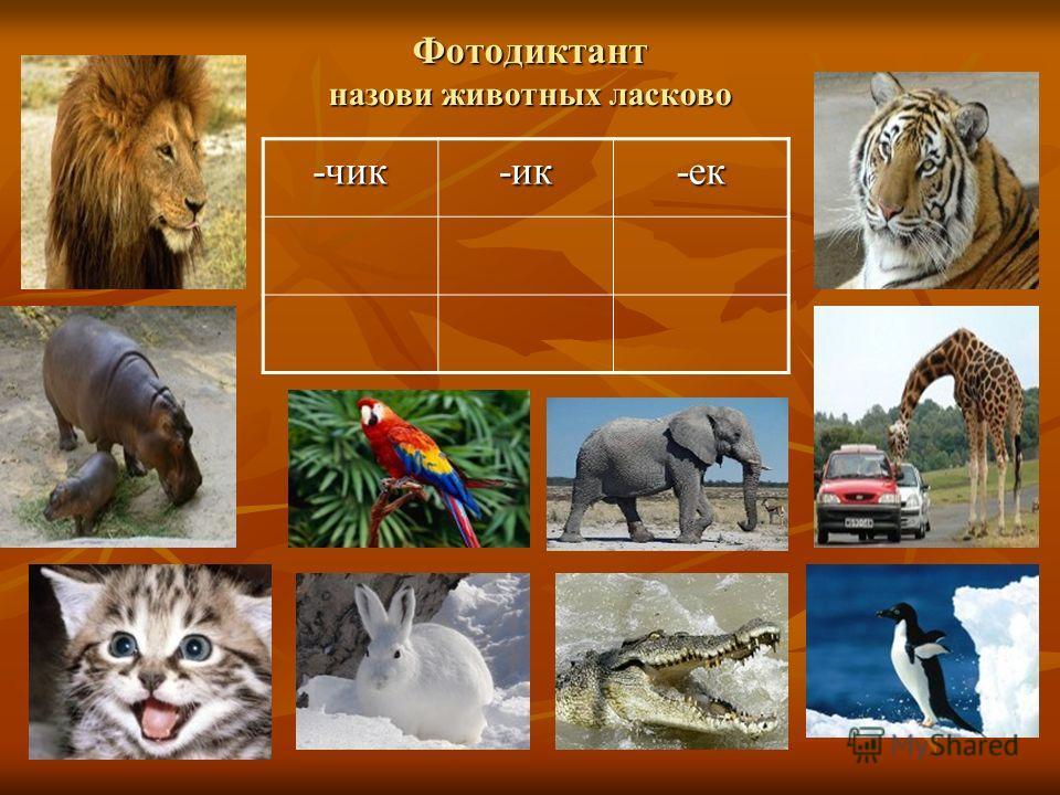 Фотодиктант назови животных ласково -чик-ик-ек