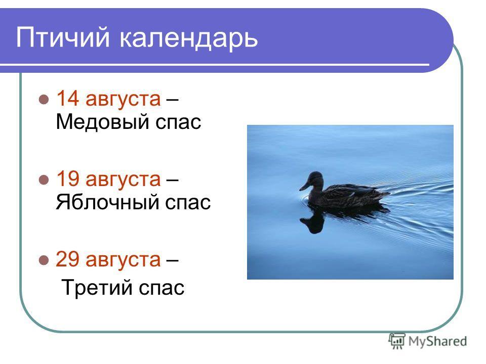 Птичий календарь 14 августа – Медовый спас 19 августа – Яблочный спас 29 августа – Третий спас
