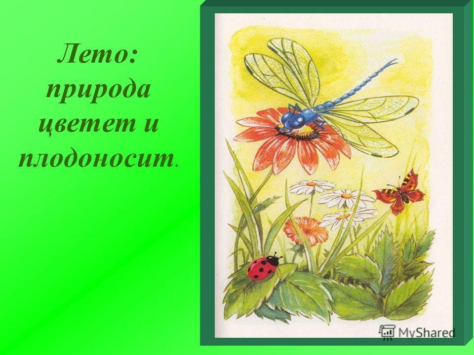 Лето: природа цветет и плодоносит.