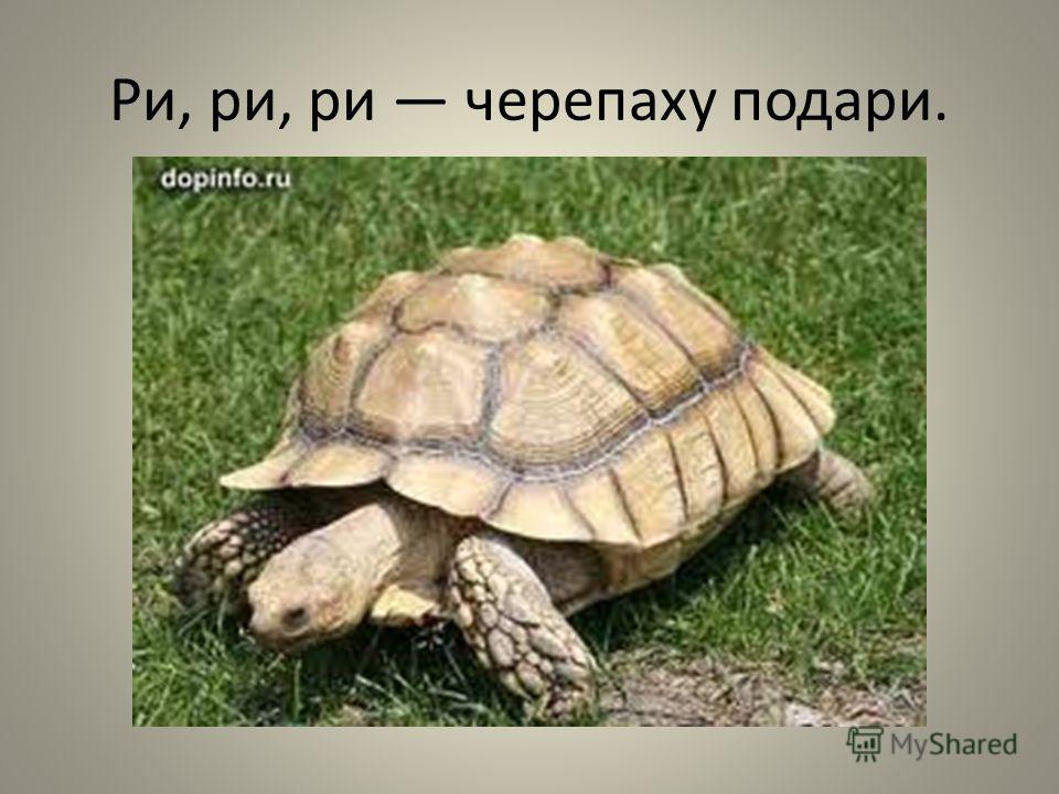 Ри, ри, ри черепаху подари.