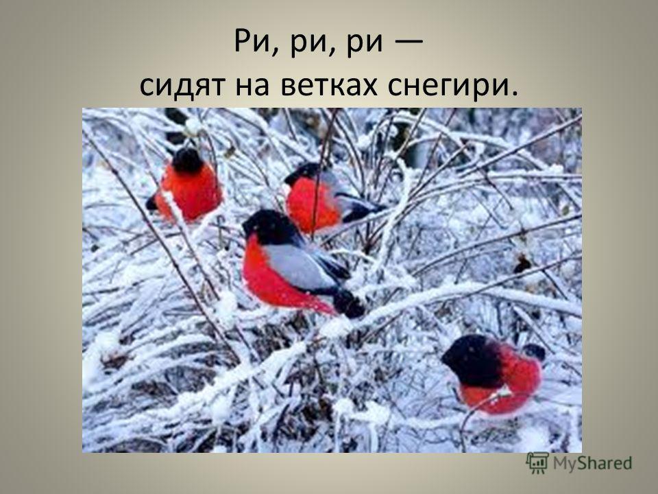 Ри, ри, ри сидят на ветках снегири.