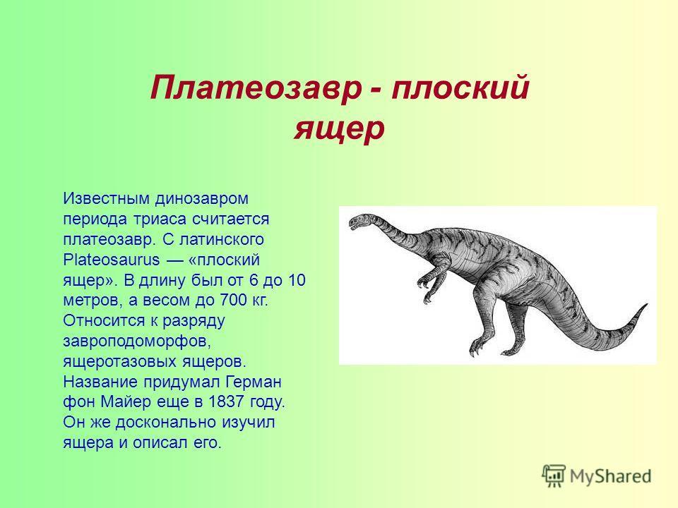 Платеозавр - плоский ящер Известным динозавром периода триаса считается платеозавр. С латинского Plateosaurus «плоский ящер». В длину был от 6 до 10 метров, а весом до 700 кг. Относится к разряду завроподоморфов, ящеротазовых ящеров. Название придума