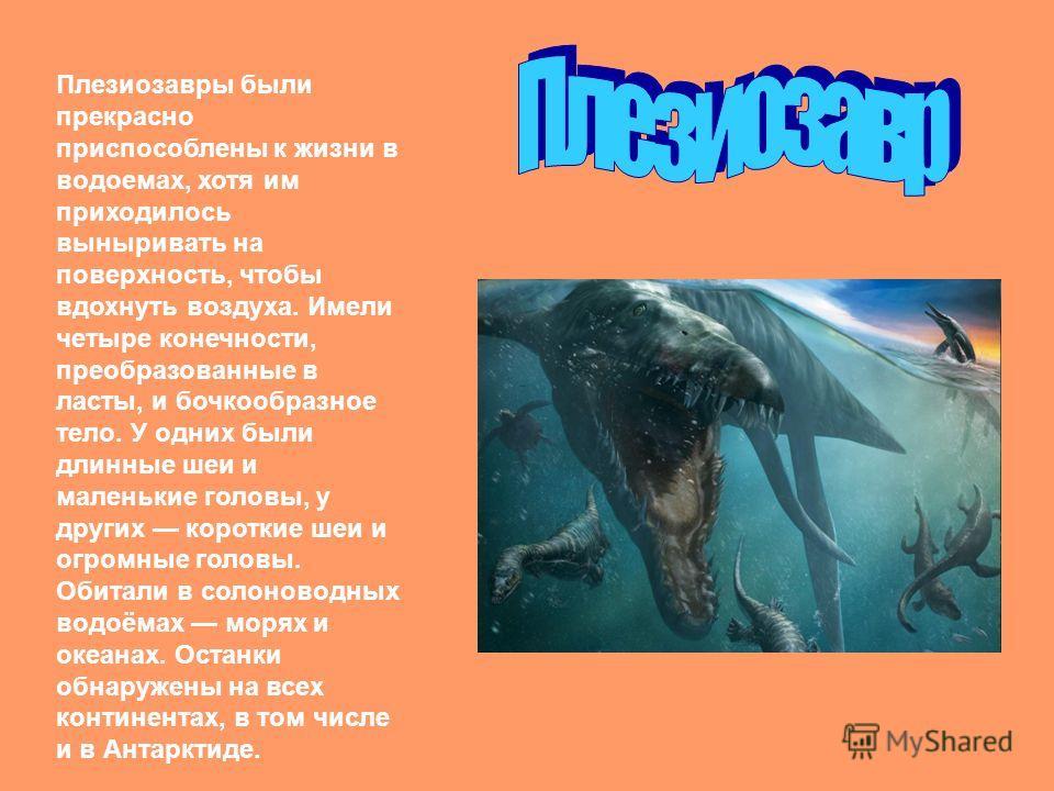 Плезиозавры были прекрасно приспособлены к жизни в водоемах, хотя им приходилось выныривать на поверхность, чтобы вдохнуть воздуха. Имели четыре конечности, преобразованные в ласты, и бочкообразное тело. У одних были длинные шеи и маленькие головы, у