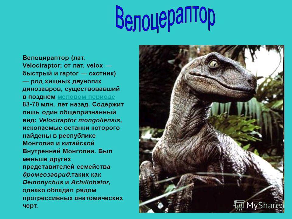 Велоцираптор (лат. Velociraptor; от лат. velox быстрый и raptor охотник) род хищных двуногих динозавров, существовавший в позднем меловом периоде 83-70 млн. лет назад. Содержит лишь один общепризнанный вид: Velociraptor mongoliensis, ископаемые остан