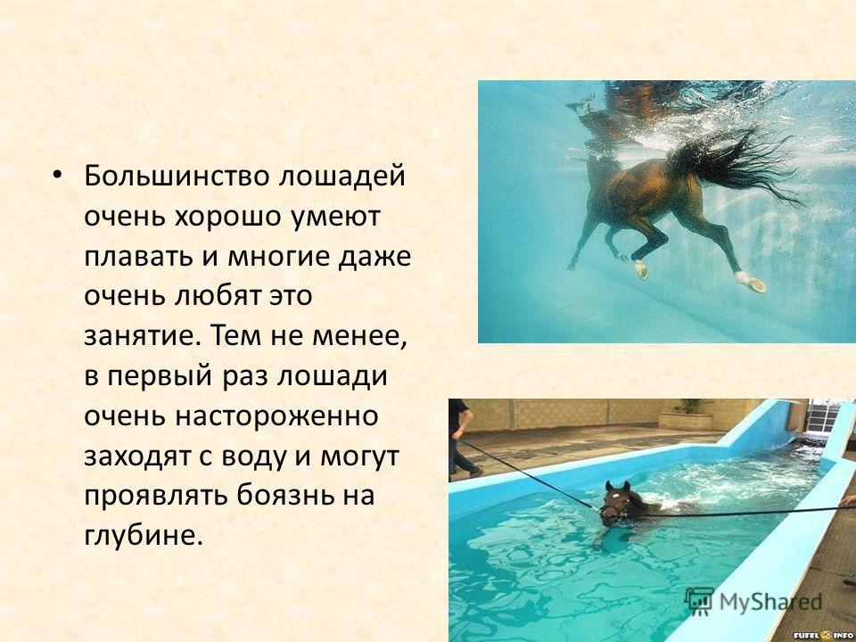 Большинство лошадей очень хорошо умеют плавать и многие даже очень любят это занятие. Тем не менее, в первый раз лошади очень настороженно заходят с воду и могут проявлять боязнь на глубине.