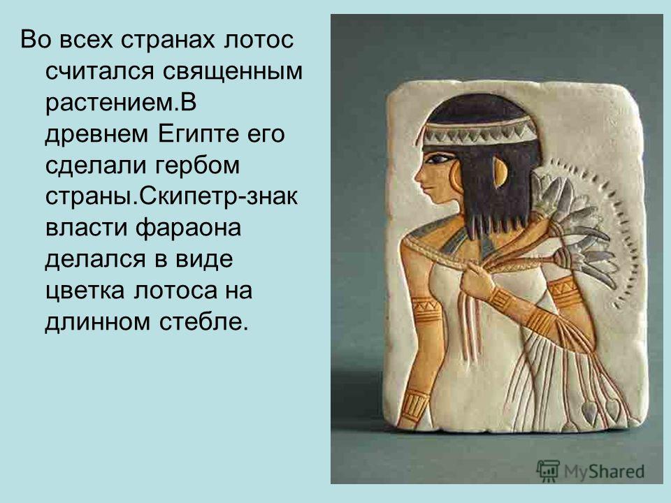 Во всех странах лотос считался священным растением.В древнем Египте его сделали гербом страны.Скипетр-знак власти фараона делался в виде цветка лотоса на длинном стебле.