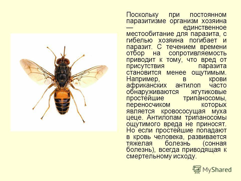 Поскольку при постоянном паразитизме организм хозяина единственное местообитание для паразита, с гибелью хозяина погибает и паразит. С течением времени отбор на сопротивляемость приводит к тому, что вред от присутствия паразита становится менее ощути