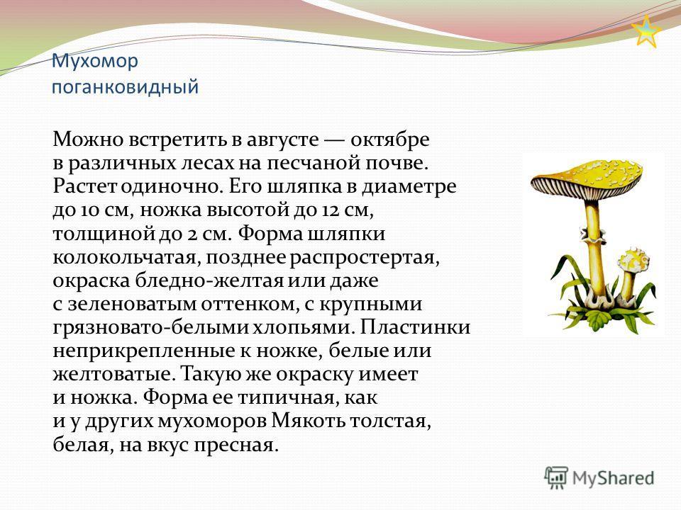 Мухомор поганковидный Можно встретить в августе октябре в различных лесах на песчаной почве. Растет одиночно. Его шляпка в диаметре до 10 см, ножка высотой до 12 см, толщиной до 2 см. Форма шляпки колокольчатая, позднее распростертая, окраска бледно-