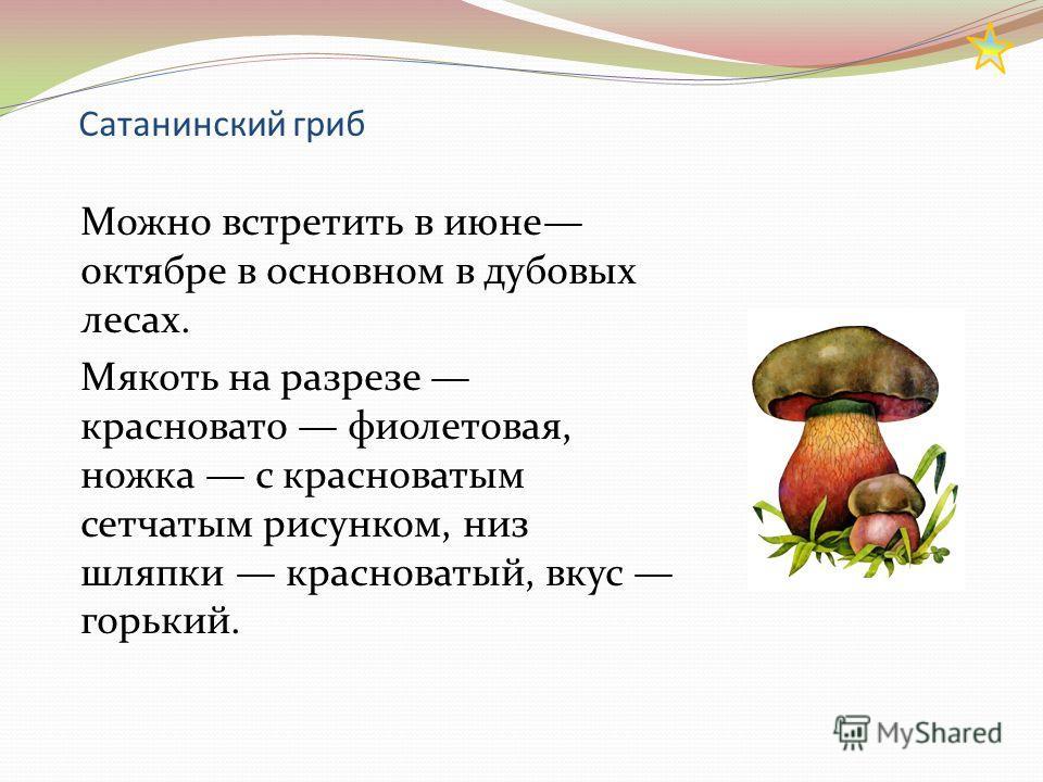 Сатанинский гриб Можно встретить в июне октябре в основном в дубовых лесах. Мякоть на разрезе красновато фиолетовая, ножка с красноватым сетчатым рисунком, низ шляпки красноватый, вкус горький.