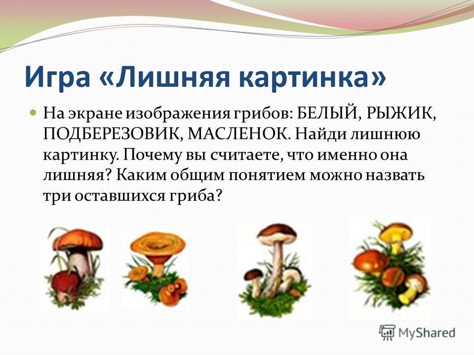 Игра «Лишняя картинка» На экране изображения грибов: БЕЛЫЙ, РЫЖИК, ПОДБЕРЕЗОВИК, МАСЛЕНОК. Найди лишнюю картинку. Почему вы считаете, что именно она лишняя? Каким общим понятием можно назвать три оставшихся гриба?