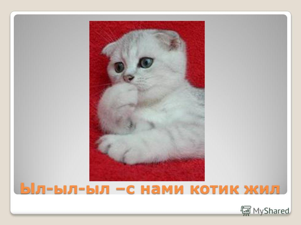 Ыл-ыл-ыл –с нами котик жил