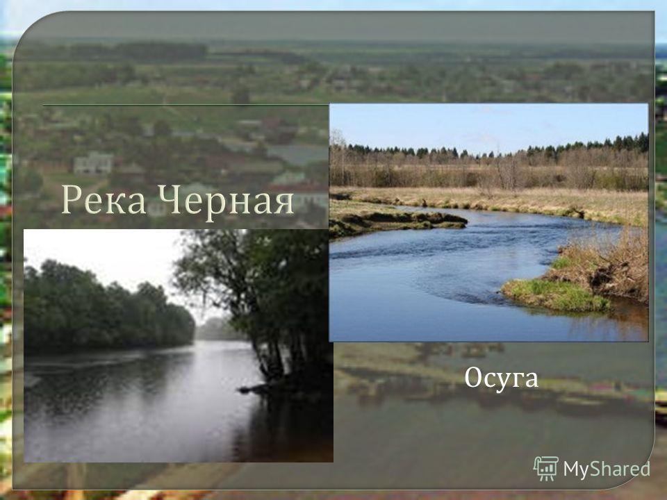 Река Черная Осуга