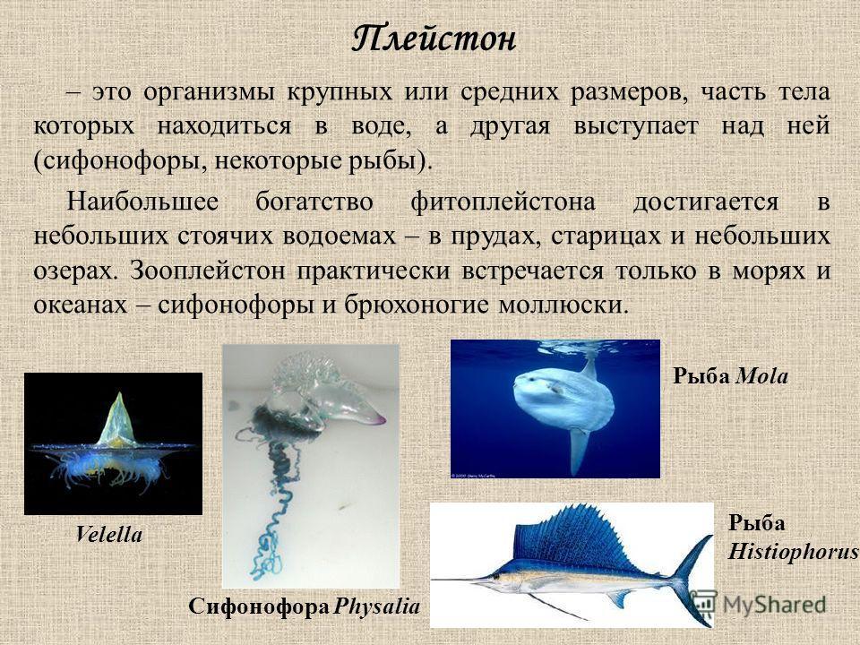 Плейстон – это организмы крупных или средних размеров, часть тела которых находиться в воде, а другая выступает над ней (сифонофоры, некоторые рыбы). Наибольшее богатство фитоплейстона достигается в небольших стоячих водоемах – в прудах, старицах и н