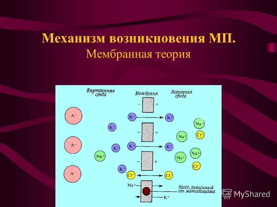 Механизм возникновения МП. Мембранная теория