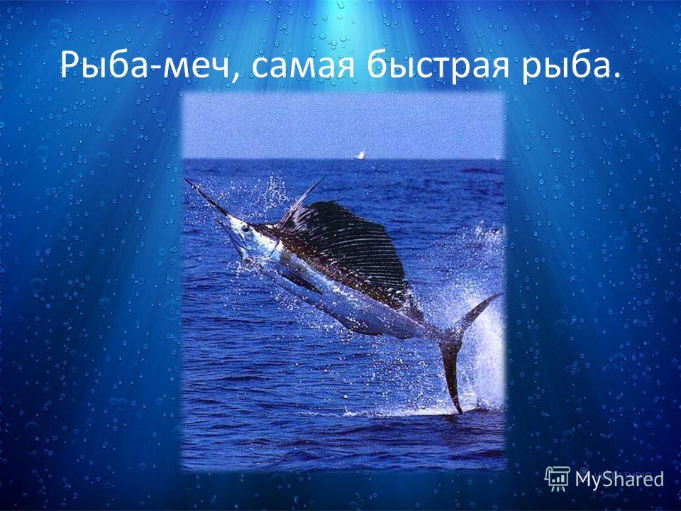 Рыба-меч, самая быстрая рыба.