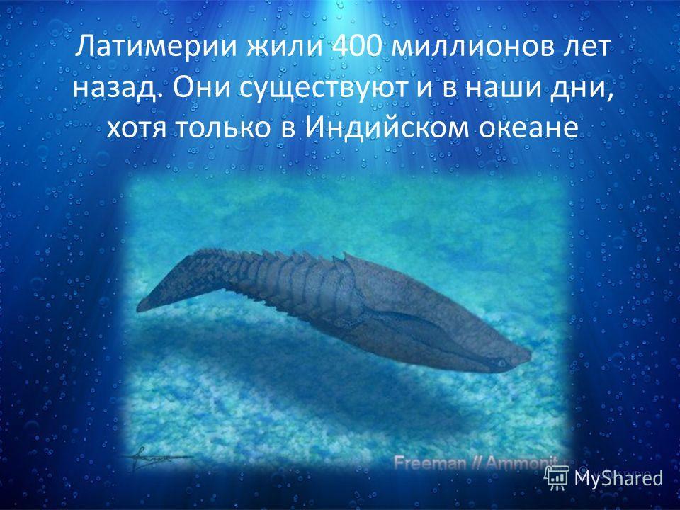 Латимерии жили 400 миллионов лет назад. Они существуют и в наши дни, хотя только в Индийском океане
