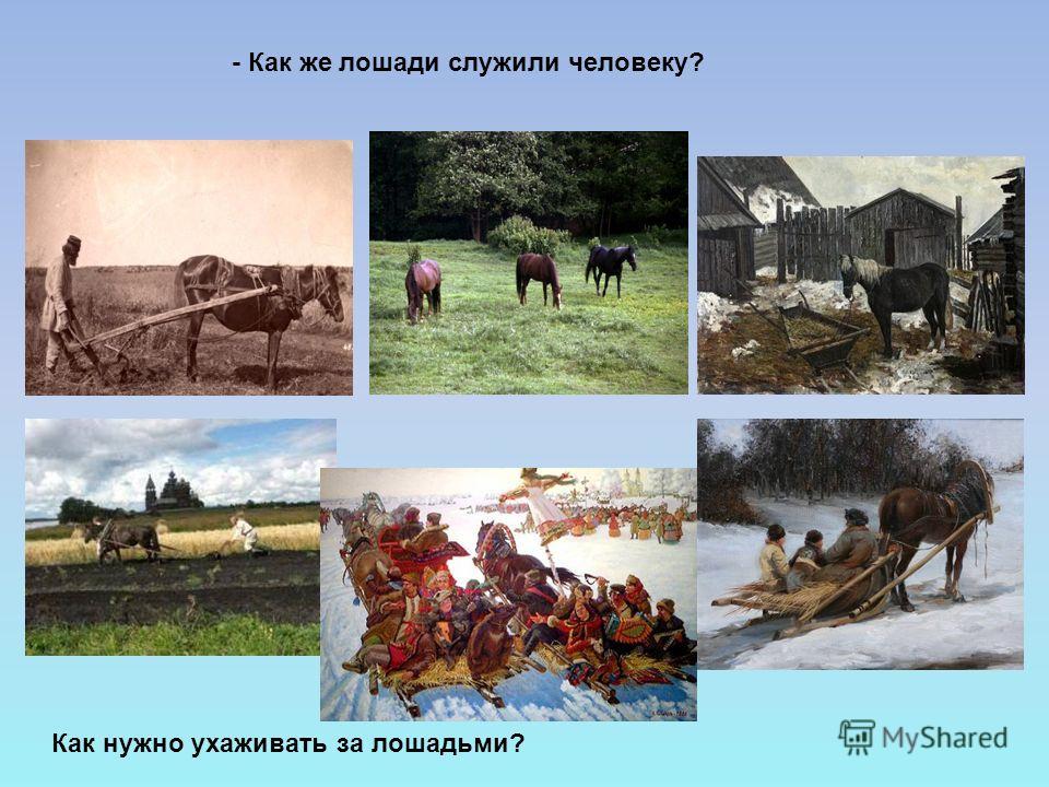 - Как же лошади служили человеку? Как нужно ухаживать за лошадьми?
