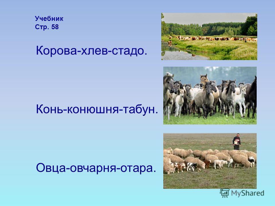 Корова-хлев-стадо. Конь-конюшня-табун. Овца-овчарня-отара. Учебник Стр. 58