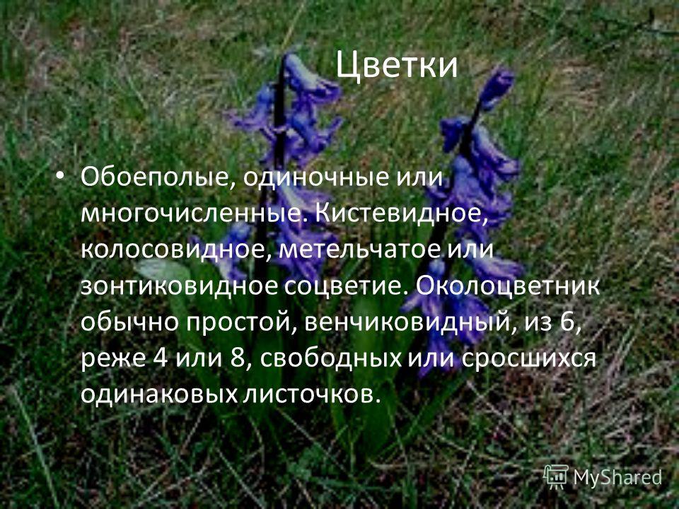 Цветки Обоеполые, одиночные или многочисленные. Кистевидное, колосовидное, метельчатое или зонтиковидное соцветие. Околоцветник обычно простой, венчиковидный, из 6, реже 4 или 8, свободных или сросшихся одинаковых листочков.
