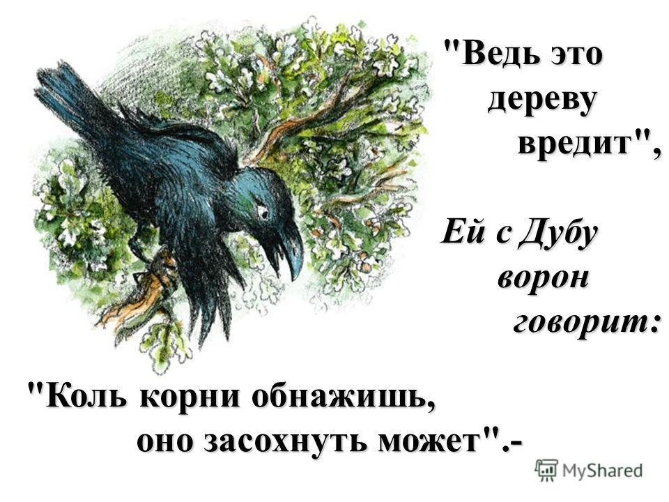 Коль корни обнажишь, оно засохнуть может.- Ведь это дереву дереву вредит, вредит, Ей с Дубу ворон ворон говорит: говорит: