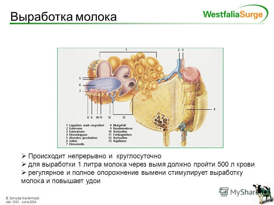B. Schulze Wartenhorst Abt. 1031 June 2004 Полное раскрытие и закрытие называется циклом пульсации. Если доить только раскрытой сосковой резинной, то при продолжении процесса собирается всё больше и больше жидкости в кончике соска. Это ещё более затр