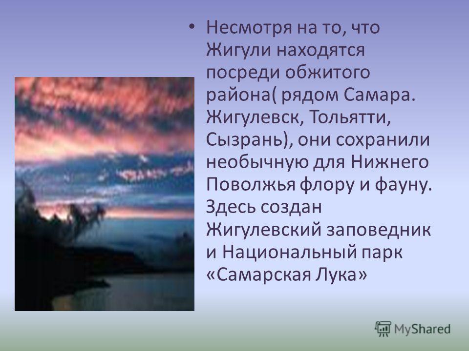 Несмотря на то, что Жигули находятся посреди обжитого района( рядом Самара. Жигулевск, Тольятти, Сызрань), они сохранили необычную для Нижнего Поволжья флору и фауну. Здесь создан Жигулевский заповедник и Национальный парк «Самарская Лука»