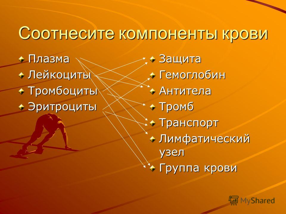 Соотнесите компоненты крови ПлазмаЛейкоцитыТромбоцитыЭритроцитыЗащитаГемоглобинАнтителаТромбТранспорт Лимфатический узел Группа крови
