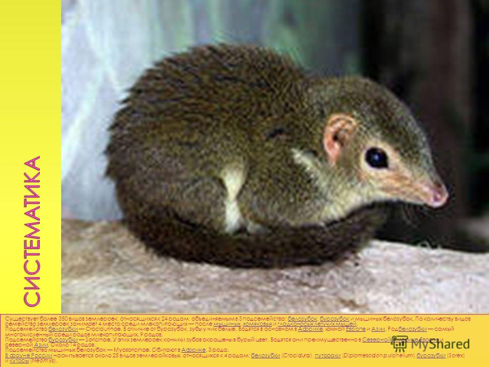 Существует более 350 видов землероек, относящихся к 24 родам, объединяемым в 3 подсемейства: белозубок, бурозубок и мышиных белозубок. По количеству видов семейство землероек занимает 4 место среди млекопитающих после мышиных, хомяковых и гладконосых