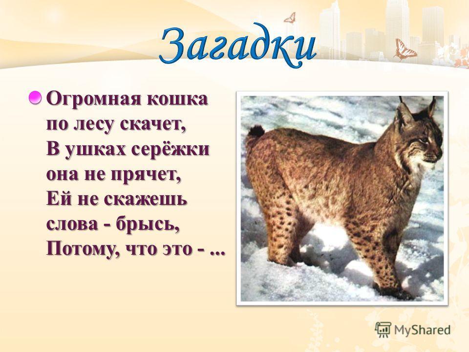 Огромная кошка по лесу скачет, В ушках серёжки она не прячет, Ей не скажешь слова - брысь, Потому, что это -...