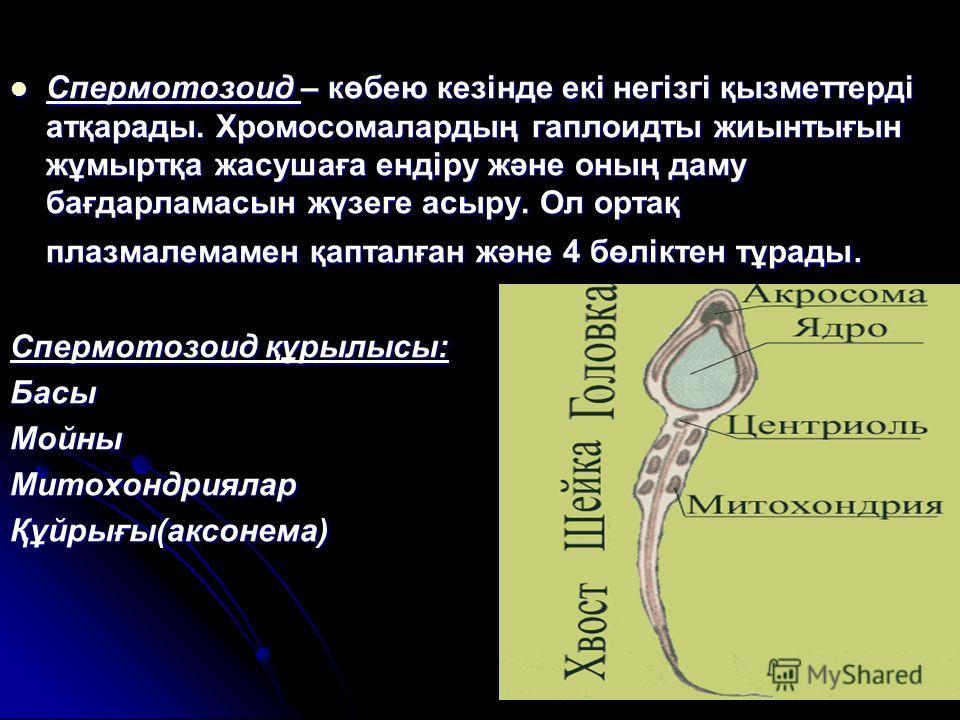 Спермотозоид – көбею кезінде екі негізгі қызметтерді атқарады. Хромосомалардың гаплоидты жиынтығын жұмыртқа жасушаға ендіру және оның даму бағдарламасын жүзеге асыру. Ол ортақ плазмалемамен қапталған және 4 бөліктен тұрады. Спермотозоид – көбею кезін
