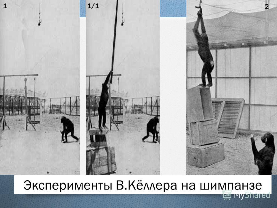 Эксперименты В.Кёллера на шимпанзе 11/11/1 2