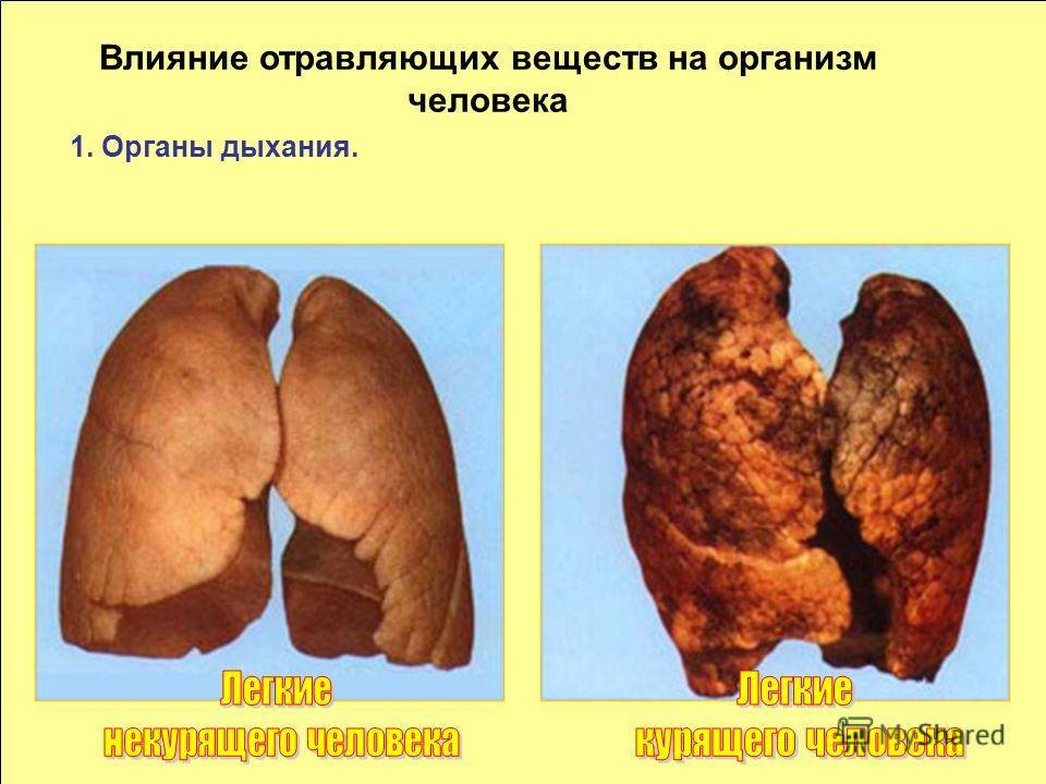 на организм Влияние отравляющих веществ на организм человека 1. Органы дыхания.