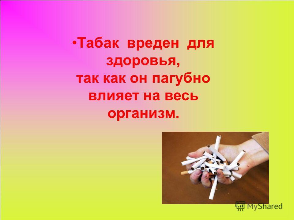 Табак вреден для здоровья, так как он пагубно влияет на весь организм.