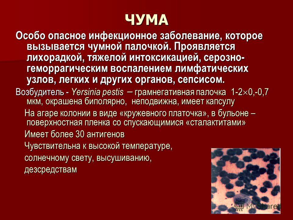 ЧУМА Особо опасное инфекционное заболевание, которое вызывается чумной палочкой. Проявляется лихорадкой, тяжелой интоксикацией, серозно- геморрагическим воспалением лимфатических узлов, легких и других органов, сепсисом. Возбудитель - Yersinia pestis