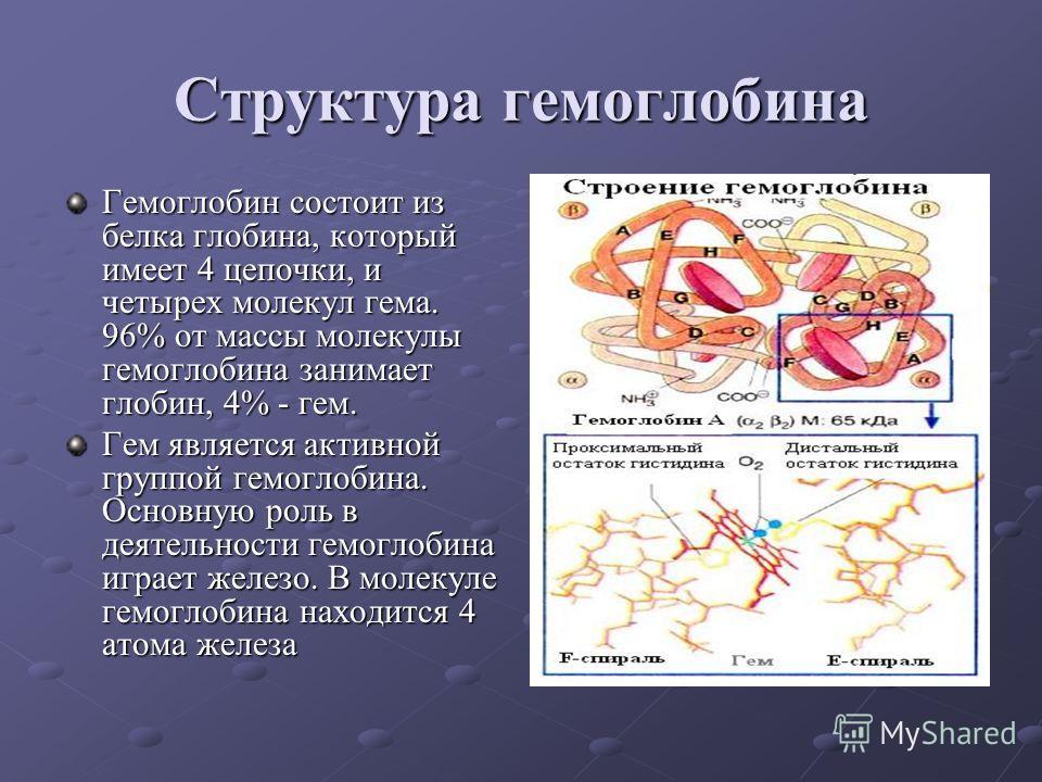 Структура гемоглобина Гемоглобин состоит из белка глобина, который имеет 4 цепочки, и четырех молекул гема. 96% от массы молекулы гемоглобина занимает глобин, 4% - гем. Гем является активной группой гемоглобина. Основную роль в деятельности гемоглоби