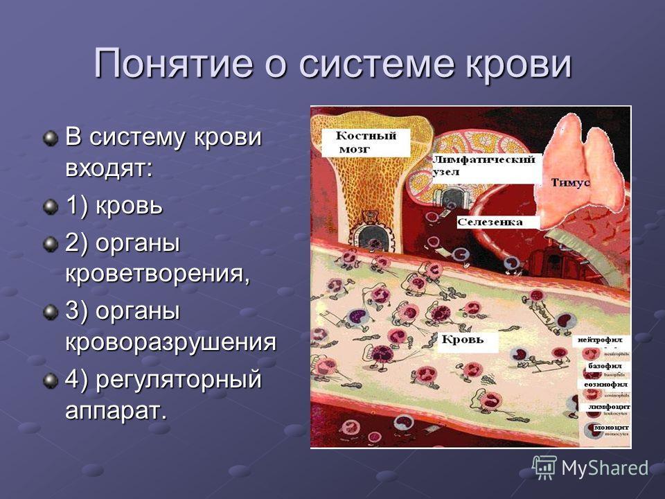 Понятие о системе крови В систему крови входят: 1) кровь 2) органы кроветворения, 3) органы кроворазрушения 4) регуляторный аппарат.